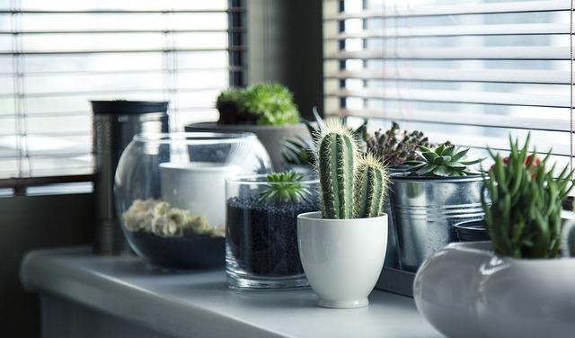 rostlinky.jpg
